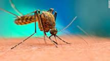 Image result for dengue image
